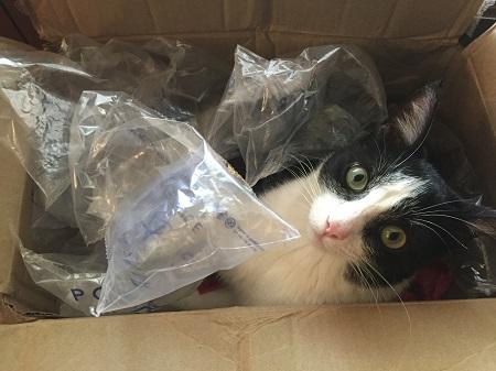 03 cat in box