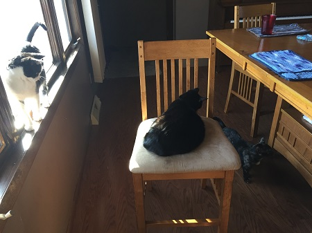 02-nimi-and-kitties